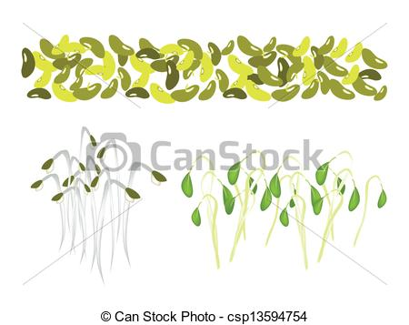 Clipart Vector of Set of Mung Beans and Sprouts on White.