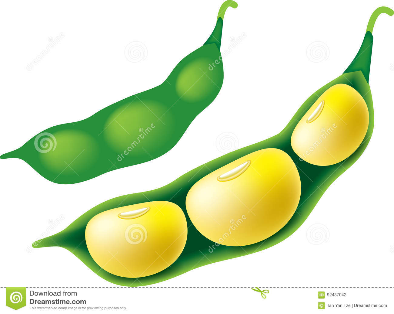 Soya Bean stock illustration. Illustration of clipart.