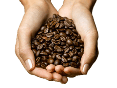 Coffee Beans In Hands transparent PNG.