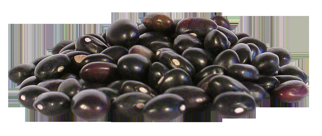 Black Beans PNG Image.