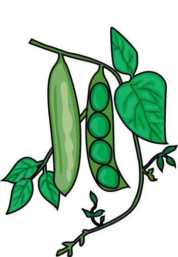 Clip Art Green Beans Clipart.