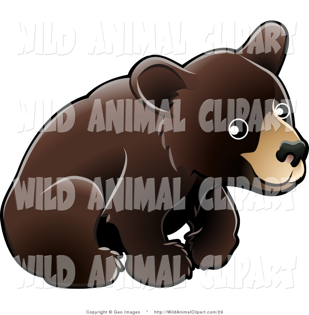 Clip Art of an American Black Bear Cub (Ursus Americanus.