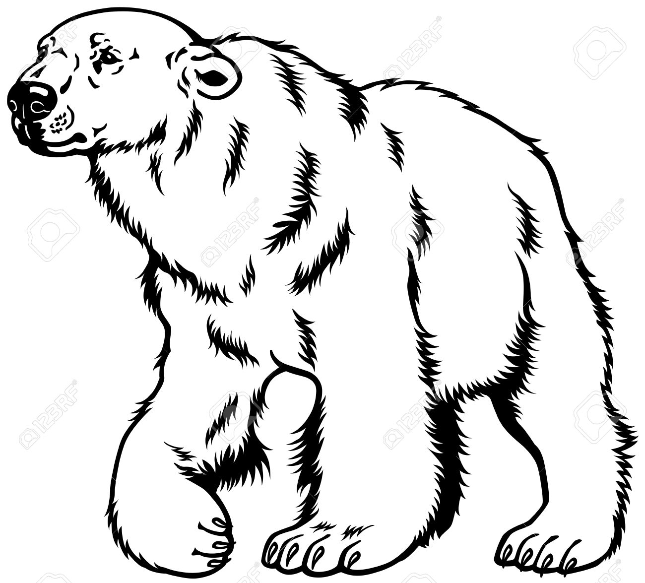 polar bear black and white image.