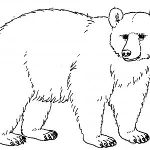 Bear black white brown bear clipart black and white china cps.