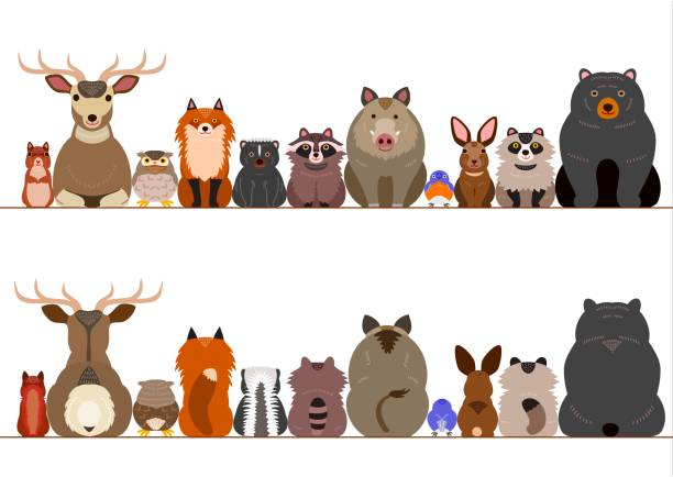 Best Bear Borders Illustrations, Royalty.