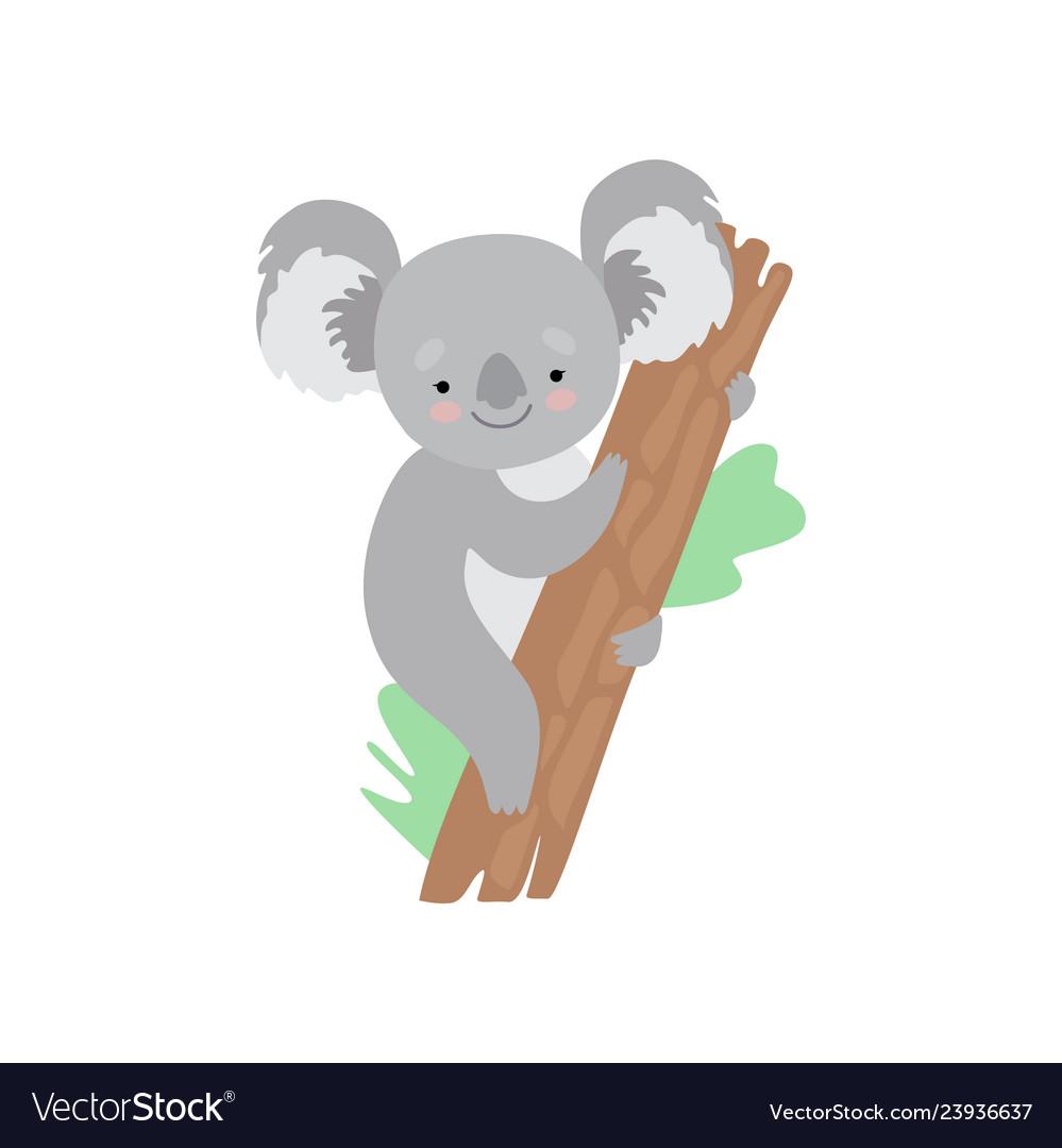 Cute koala bear climbing tree funny grey animal.