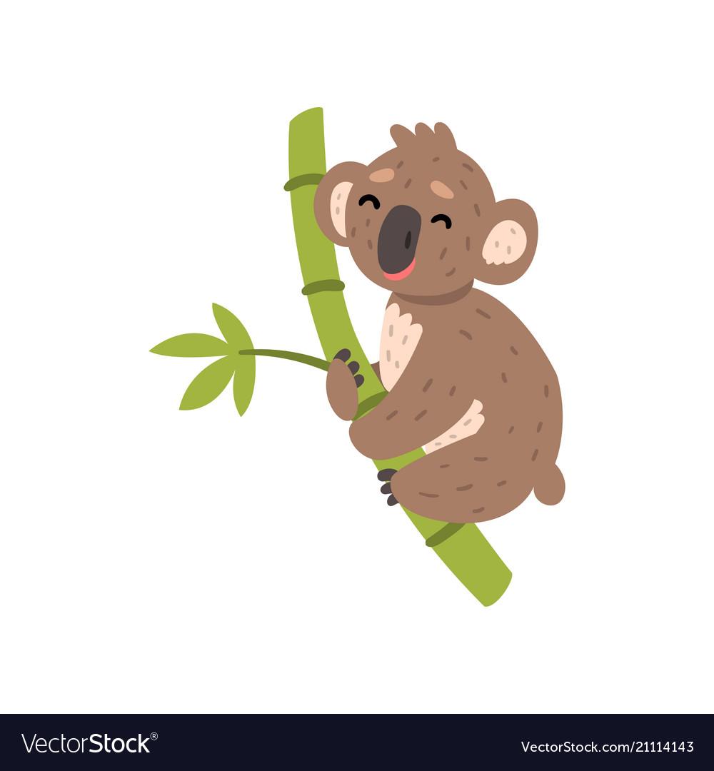 Cute koala bear climbing tree branch australian.