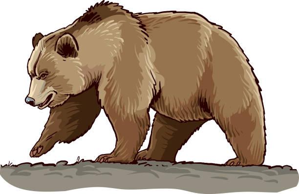 Best Brown Bear Illustrations, Royalty.