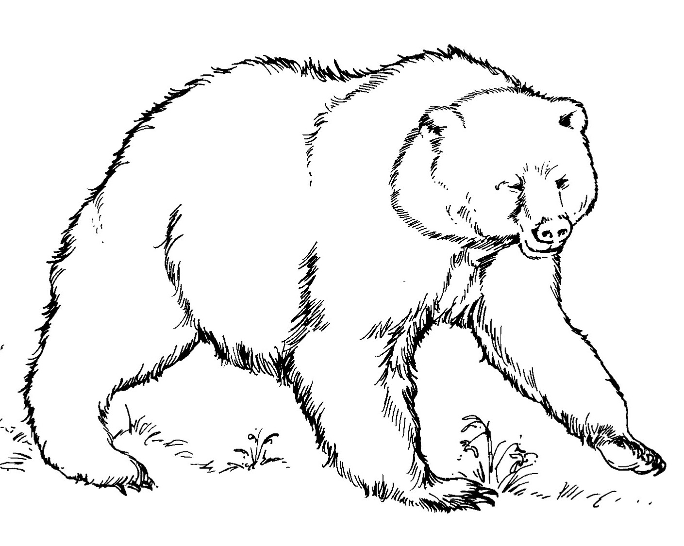 Free Brown Bear Printables, Download Free Clip Art, Free.