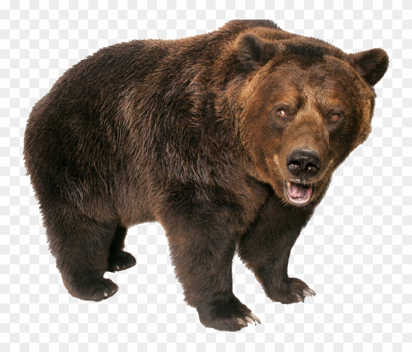 Grizzly Bear Standing.