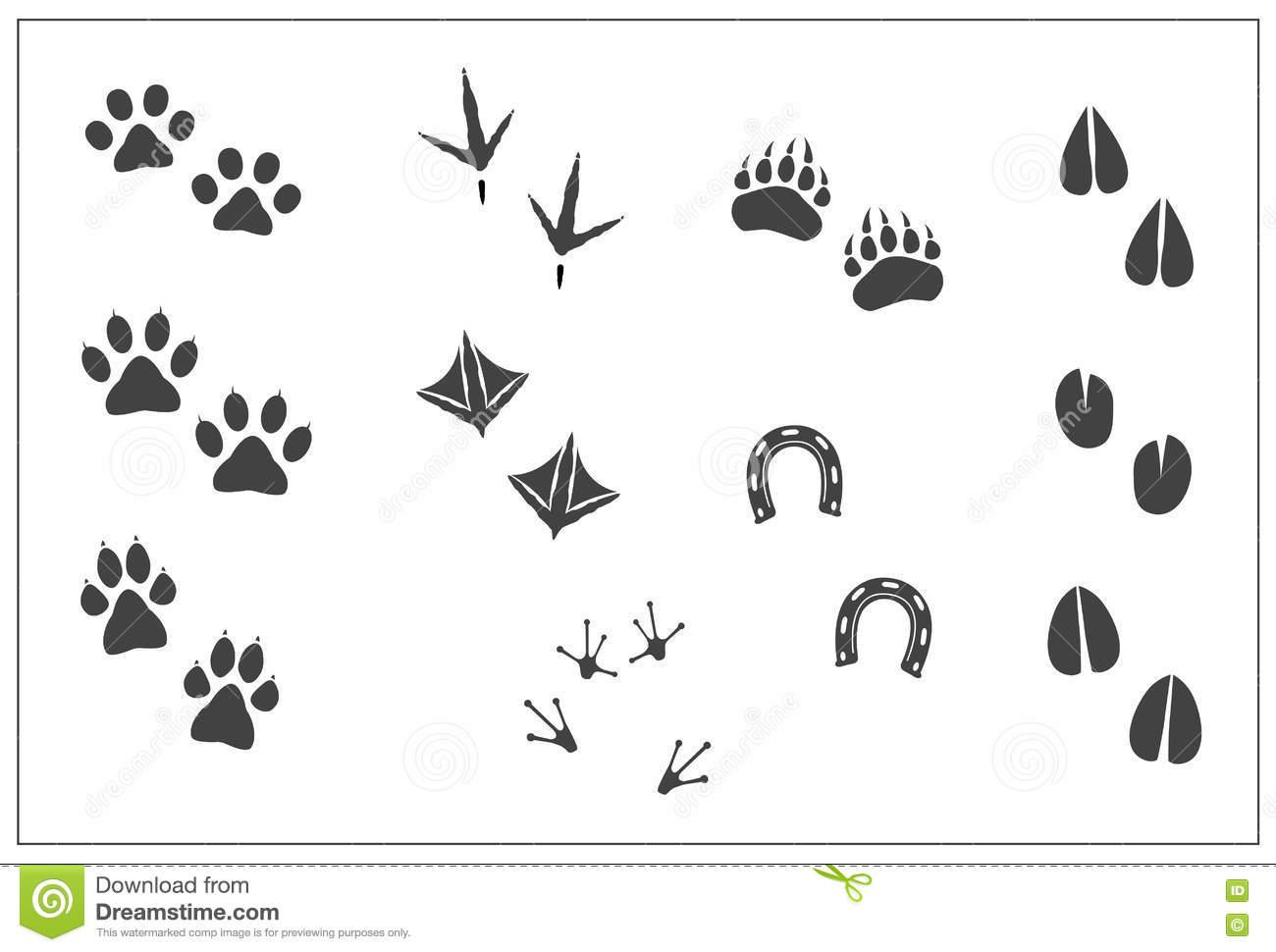 Bear Feet Stock Illustrations.