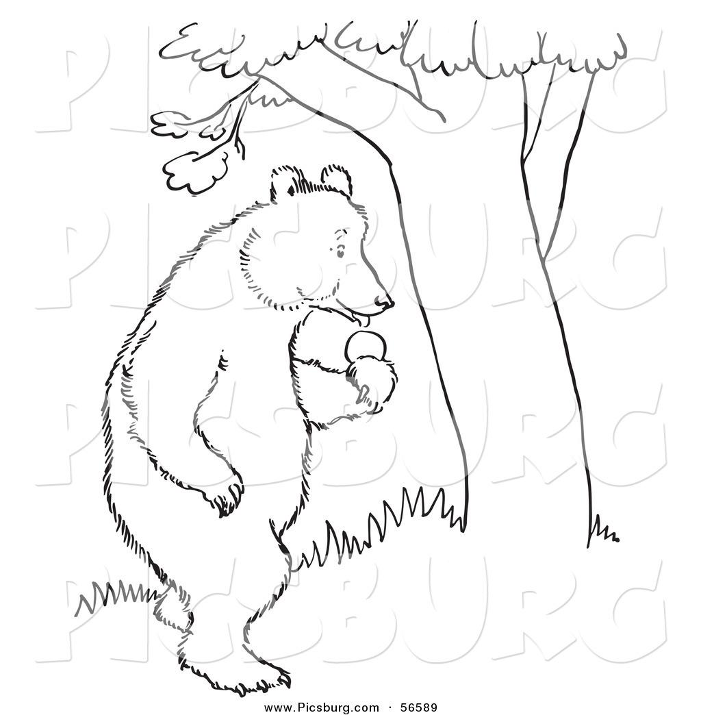 Bear In Tree Clipart.