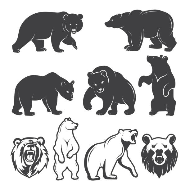 Grizzly Bears Clipart & Free Grizzly Bears Clipart.png.