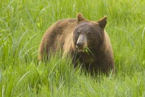 Bear Photo Clipart Image.