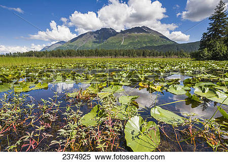 Stock Image of Lily pads in a Bear lake along the New Seward.