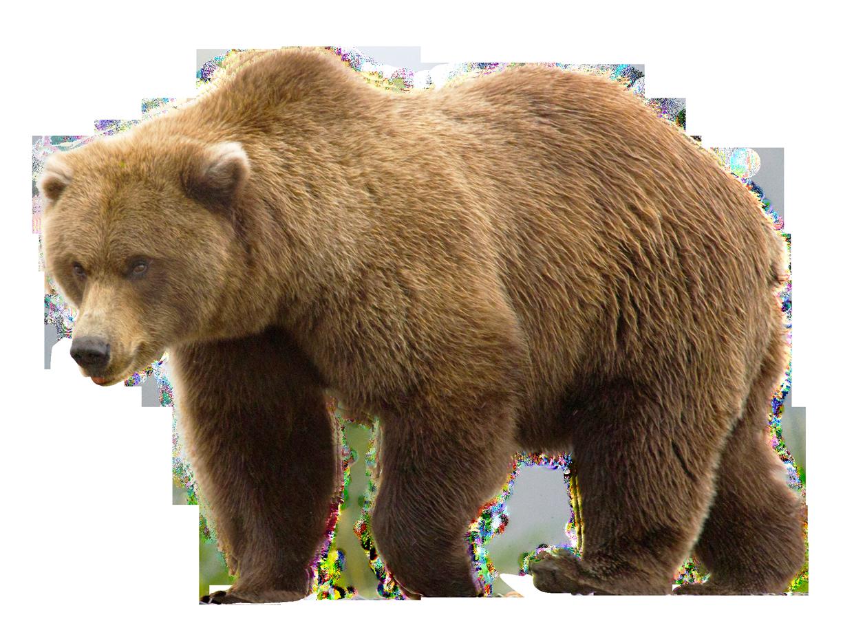 Bear PNG Image.