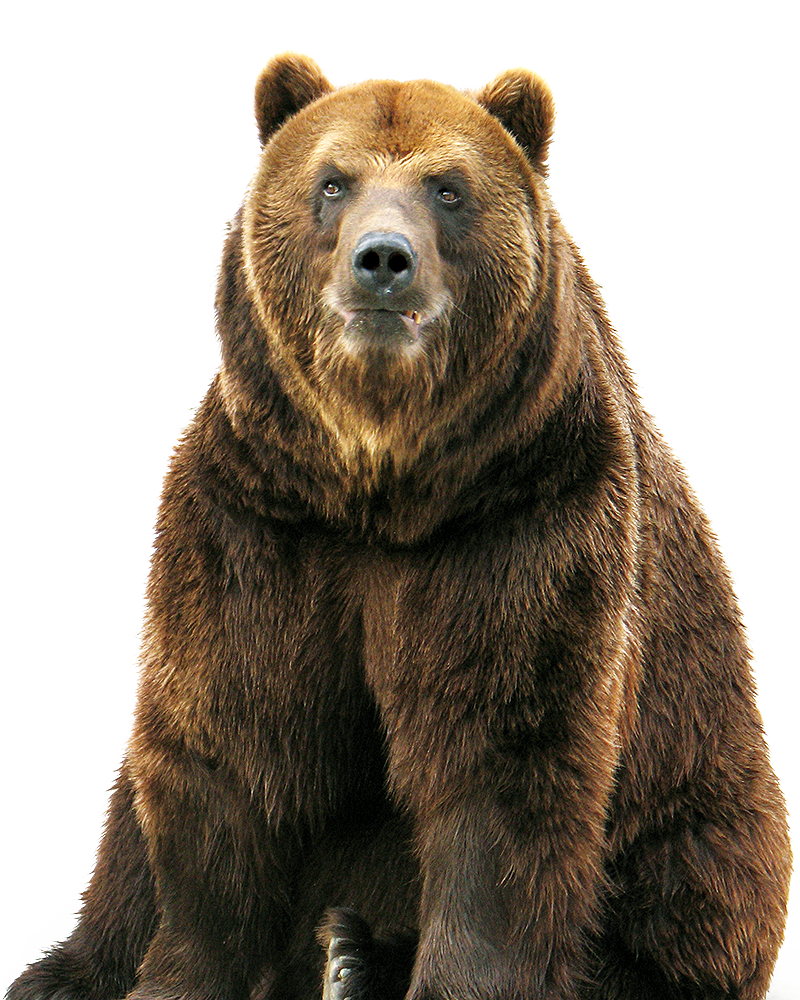 Bear Download Free PNG.