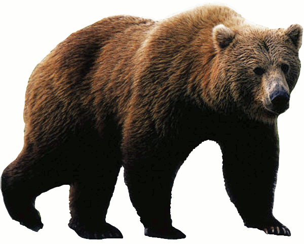 Download Free png bear PNG, Download PNG image with transparent.