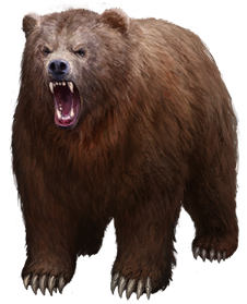 Bear PNG free images.