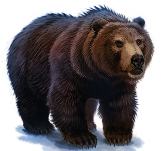 Bear PNG Transparent Bear.PNG Images..
