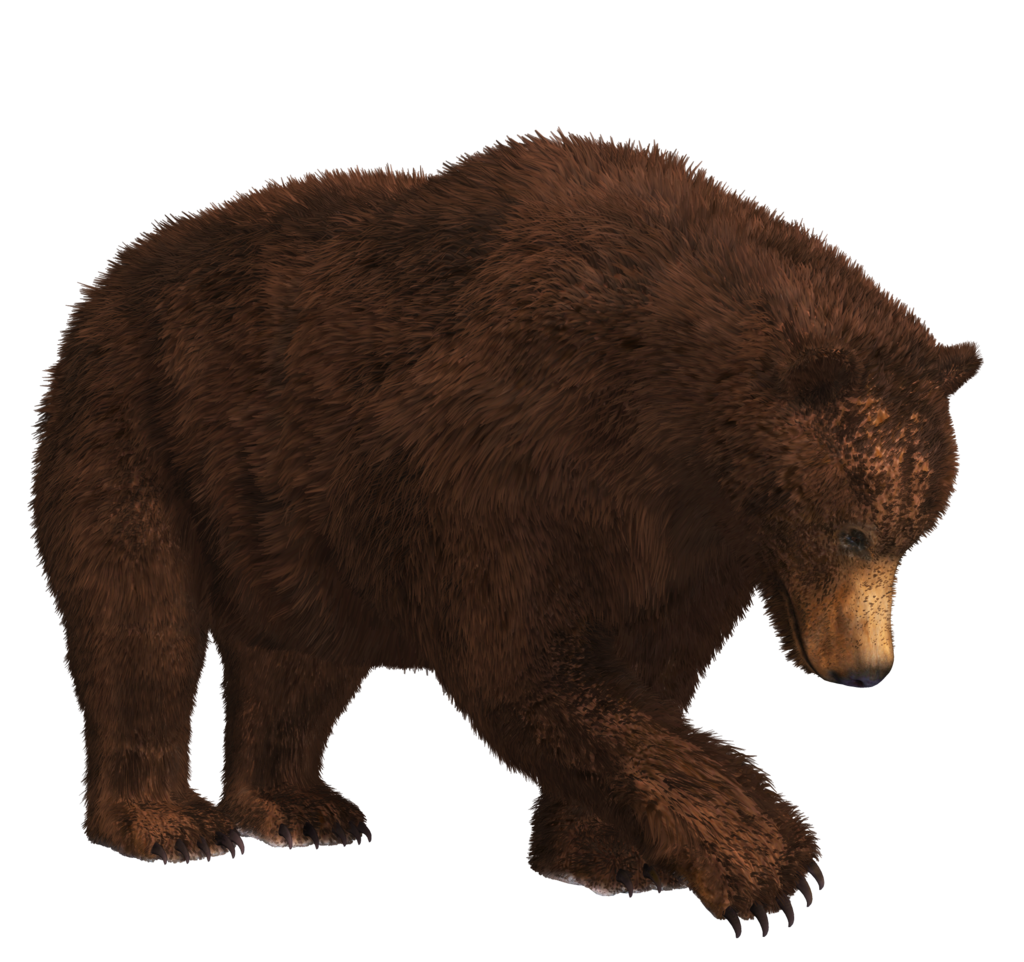 Download Bear PNG 9.