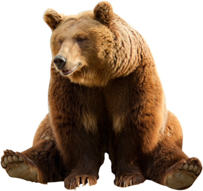 Bear Png Image With Transparent Background Bears Png Without.