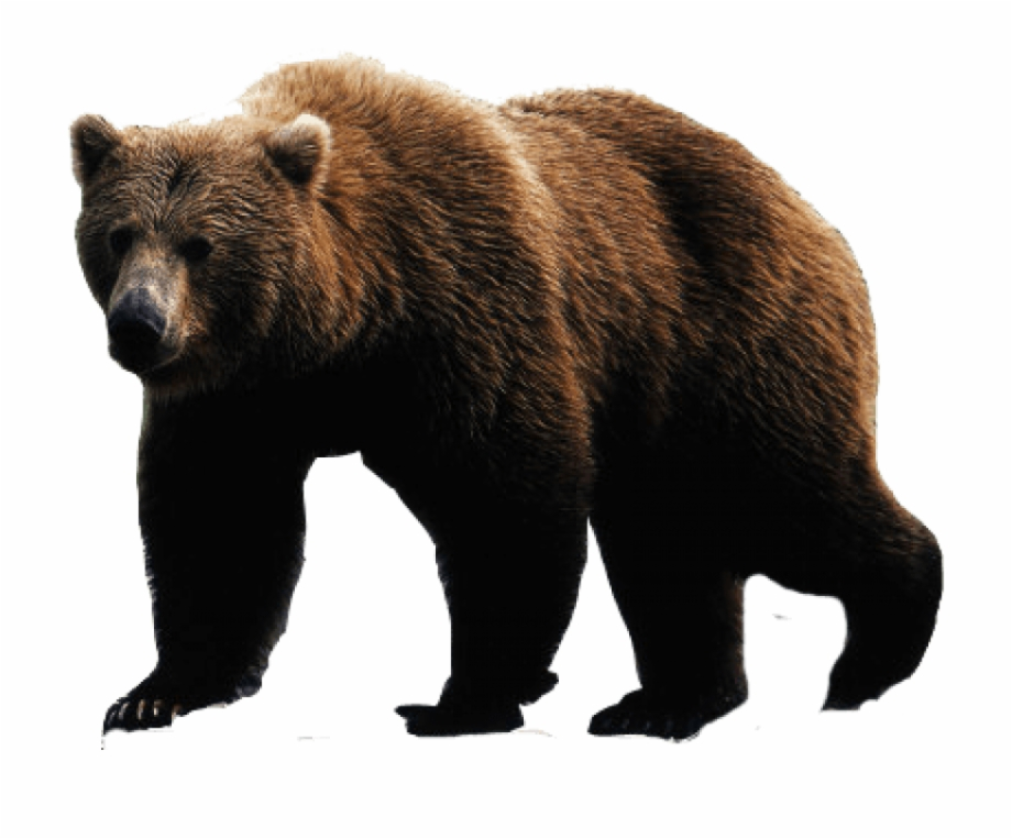 Brown Bear Png Image.