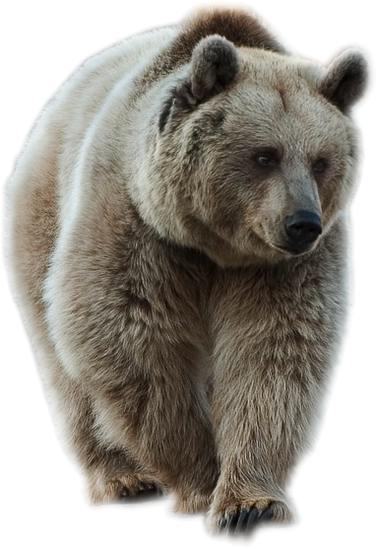 Transparent Brown Bear PNG Picture.