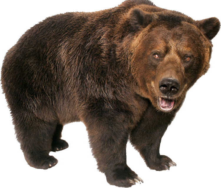Grizzly Bear Standing PNG Image.