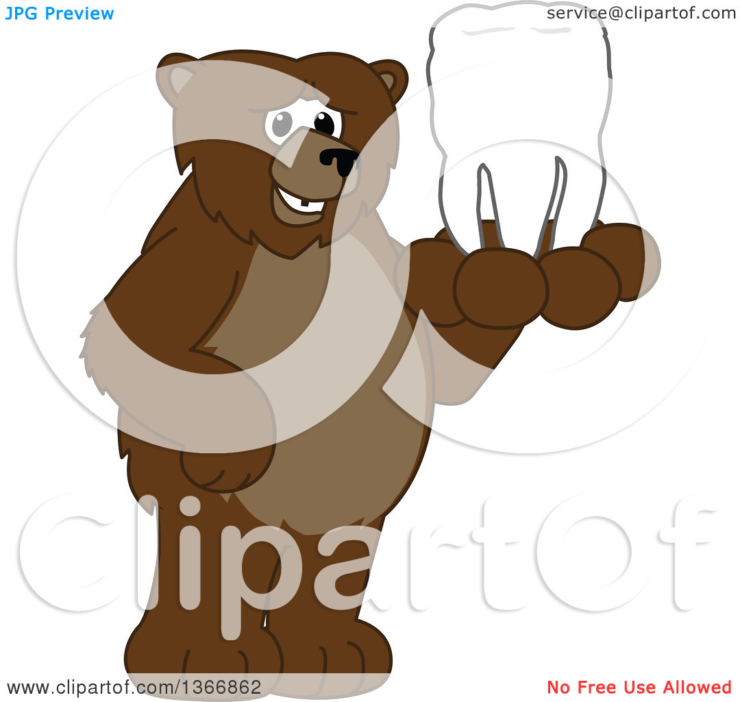 Clipart of a Grizzly Bear School Mascot Character Holding a Tooth.