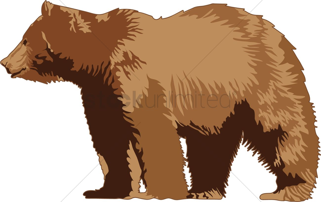 Grizzly bear Vector Image.