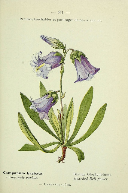 1000+ images about Botanical Prints on Pinterest.