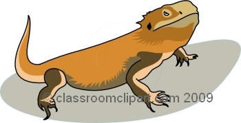 Bearded dragon clip art.