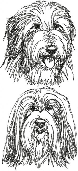 1000+ images about Bearded Collie kunst on Pinterest.