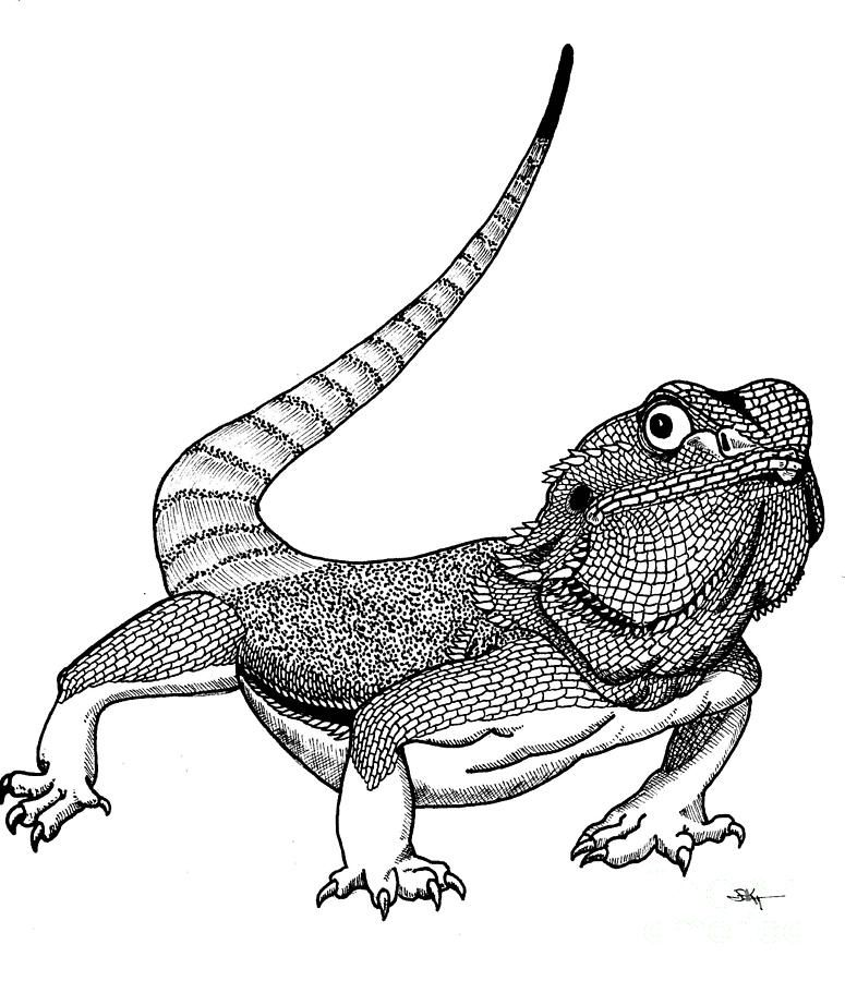 View gallery with 37 bearded dragon drawing images in 2019.