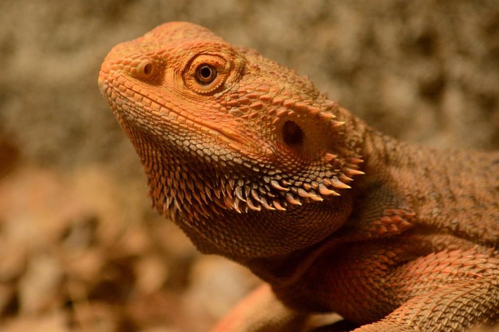 RJ's Reptiles.