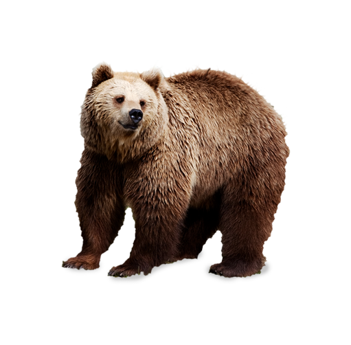 Brown bear Polar bear Clip art.