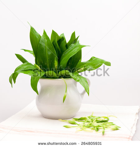 Bear's Garlic Stock Photos, Royalty.