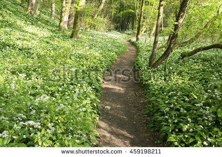 "bear Garlic"" Stock Photos, Royalty."