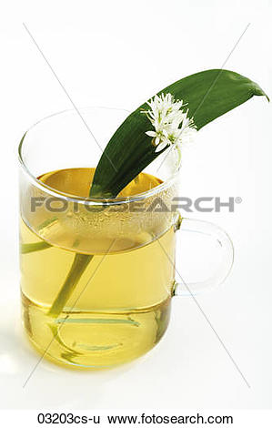 Stock Images of Bear's garlic with herbal tea 03203cs.