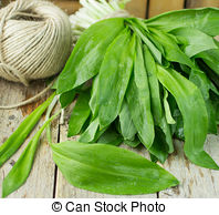 Stock Photo of bear's garlic.