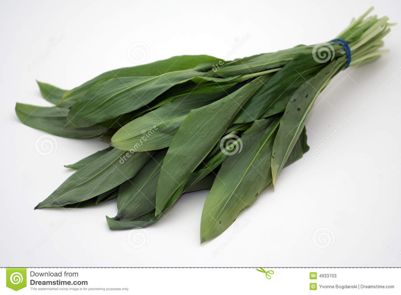 Bears Garlic Stock Photos.