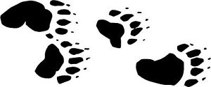 "Bear Tracks Paw Print Decals 3 75""x9"" Choose Color."