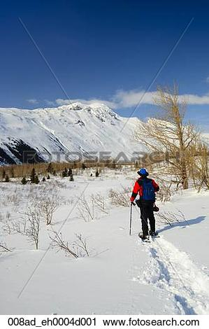 Stock Photography of A man and his dogs snowshoeing in Bear Valley.