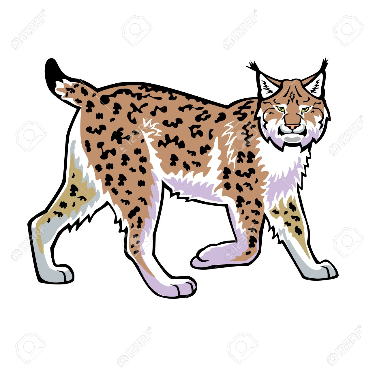 Lynx Isolated On White Background Side View Royalty Free Cliparts.