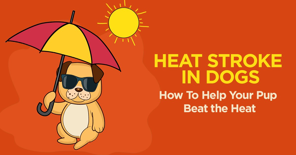 Heat Stroke in Dogs: 20 Things You Should Know.