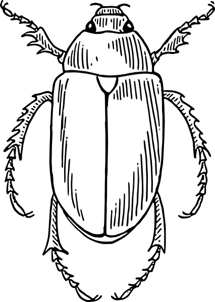 Beetle clip art Free vector in Open office drawing svg.