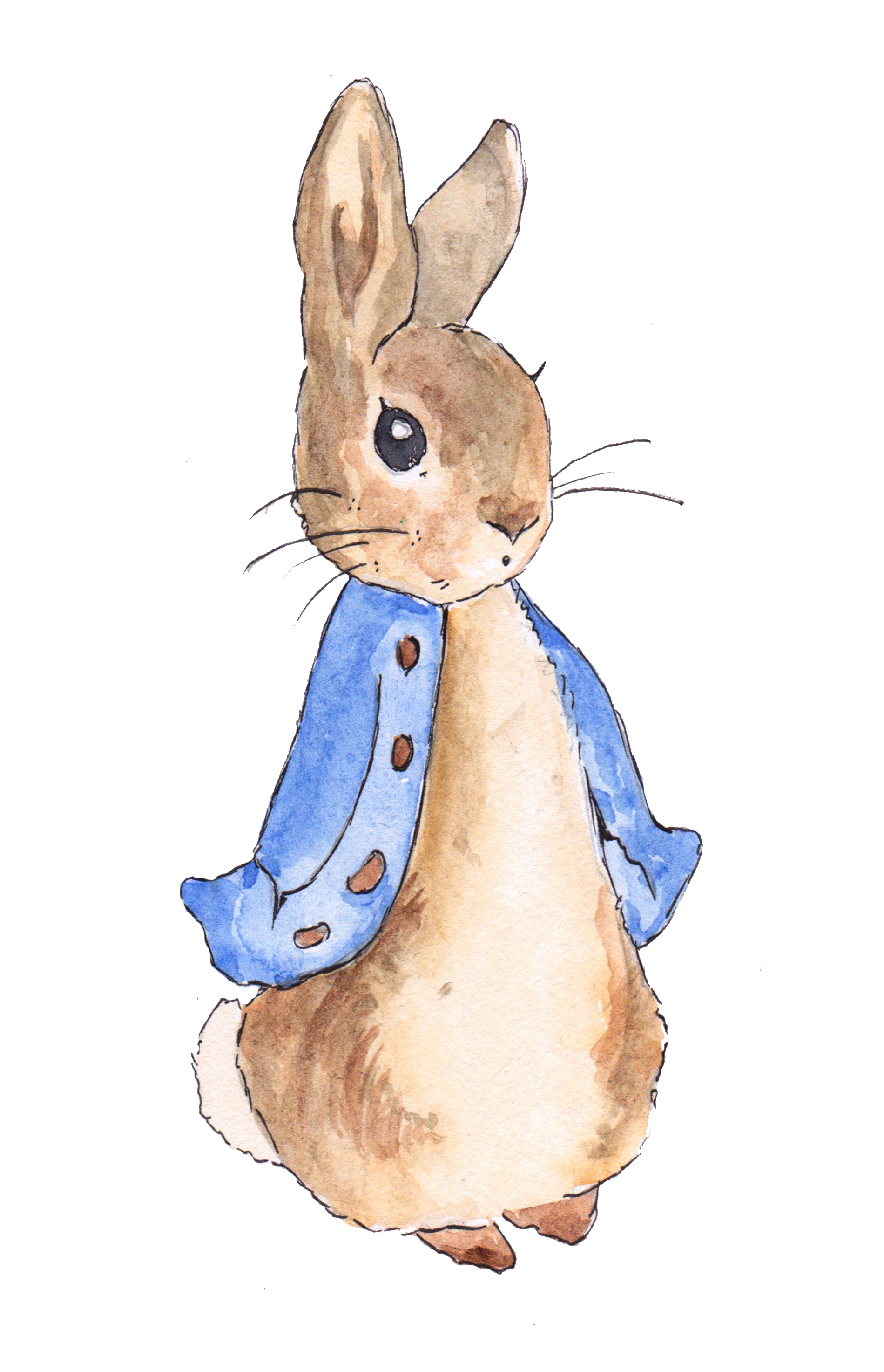 Peter Rabbit in 2019.