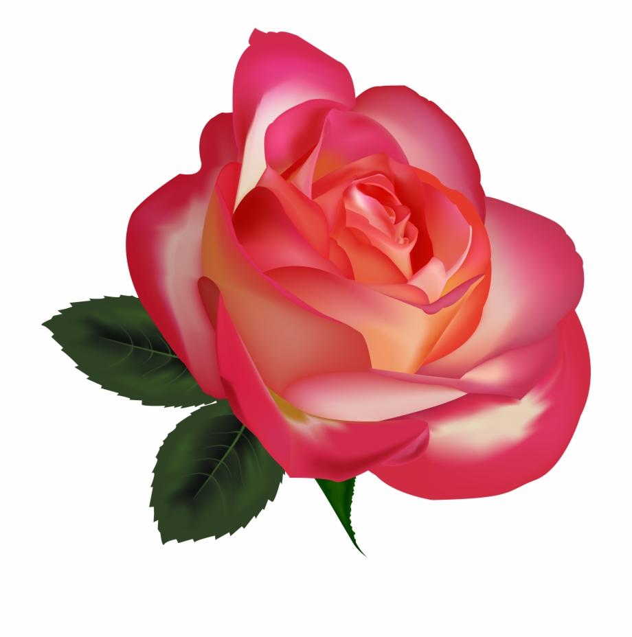 Beautiful Rose Png Clipart Image Clipart Rose Emoji.