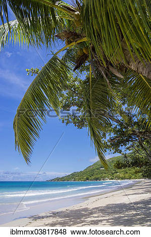 """Pictures of """"Beach with palm trees, Beau Vallon, Mahe, Seychelles."""